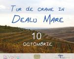 10 OCTOMBRIE - VIZITE SI DEGUSTARI DE VIN IN DEALU MARE