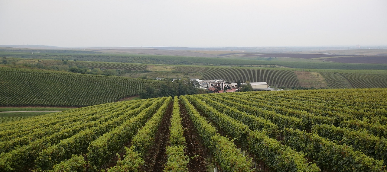 Recas Wineries