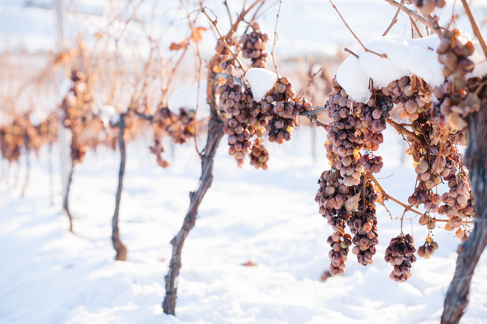 Ice Wine Crama Liliac