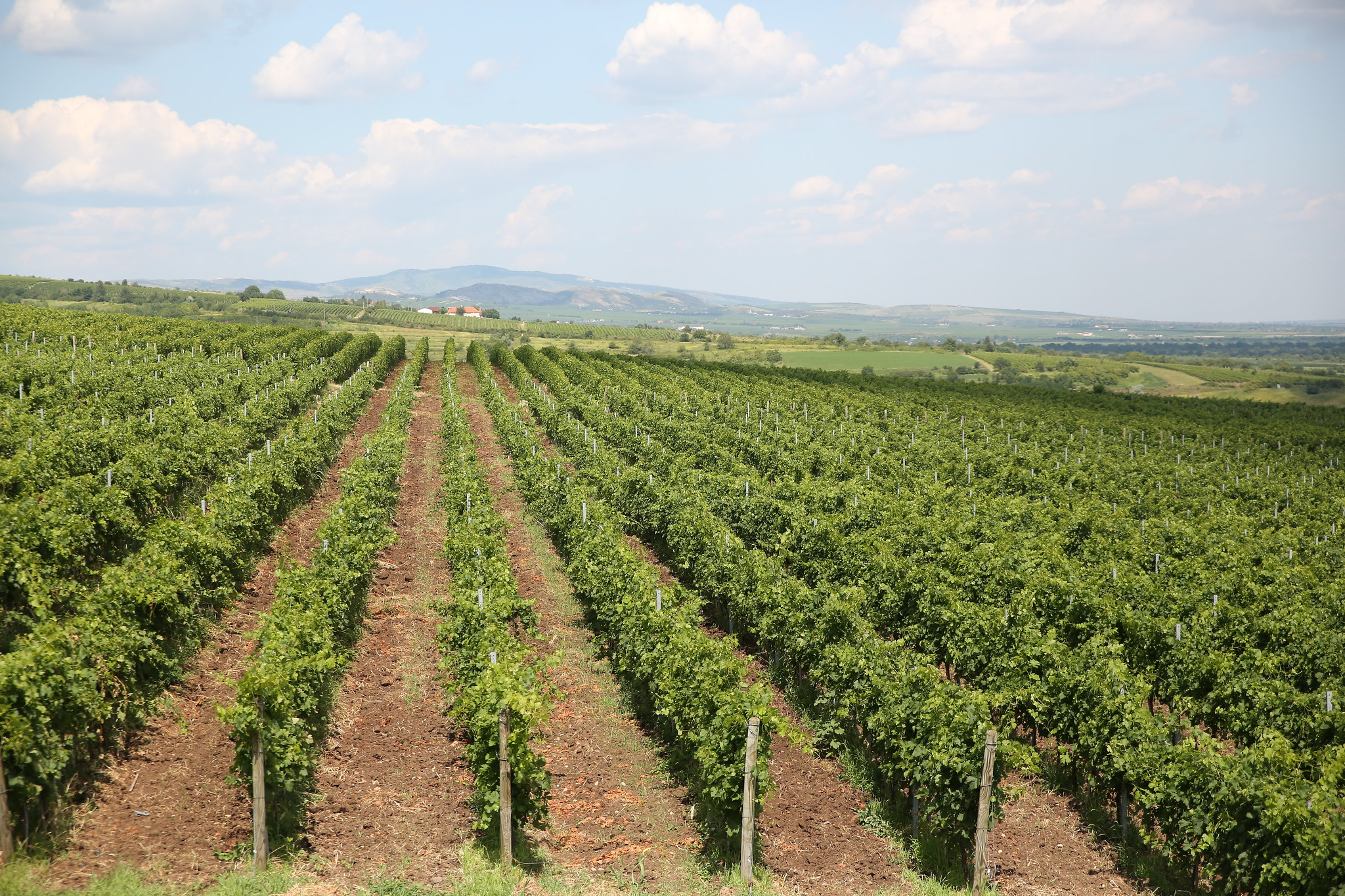 PRESS RELEASE1Geneva, l5 July 2019OIV REPORT ON THE WORLD VITIVINICULTURAL SITUATION
